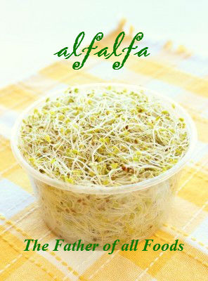 Alfalfa - Father of all Foods