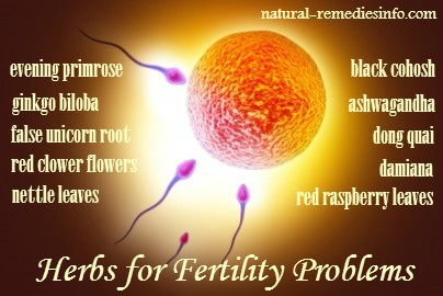 herbs to increase fertility naturally