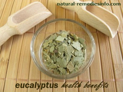 Eucalyptus health benefits
